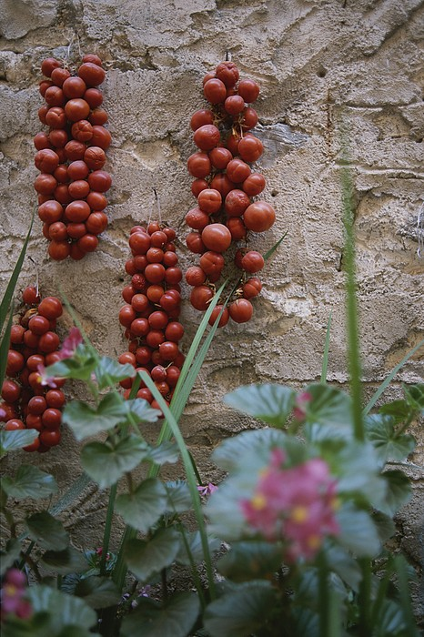 Strings Of Tomatoes Dry On A Wall Print by Tino Soriano