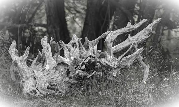 Stumped Print by Daniel Milligan