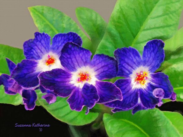 Susanna  Katherine - Stunning Blue Flowers