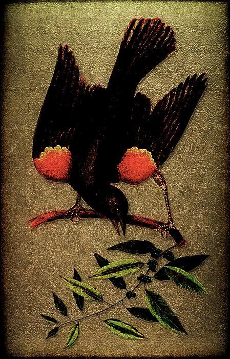 Sturnus Niger Alis Supernis Rubro Colore Print by Li   van Saathoff