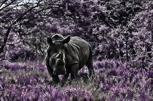 Styled Environment-the Modern Trendy Rhino Print by Douglas Barnard