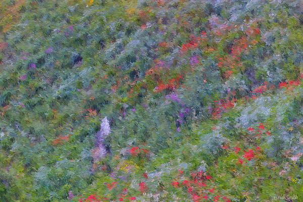 Heidi Smith - Subalpine Wildflowers - Impressionism