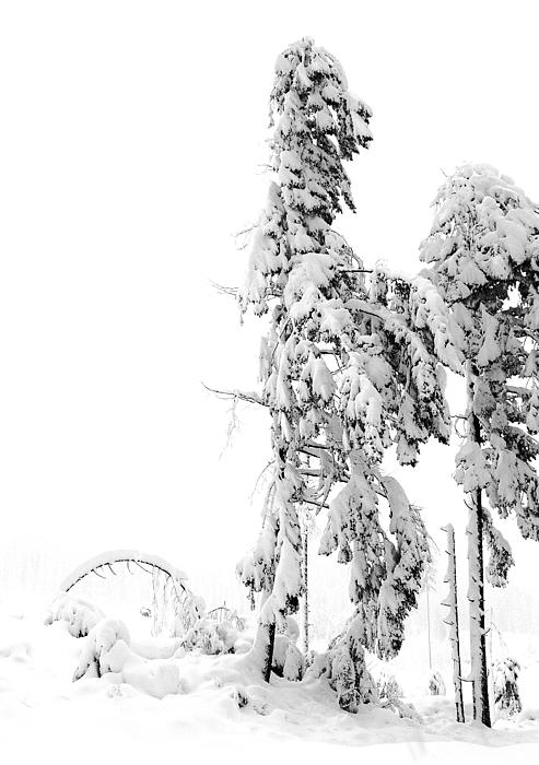 Sudden Blizzard 3   Print by Christine Burdine