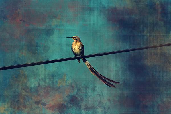 Deborah Hall Barry - Sugarbird