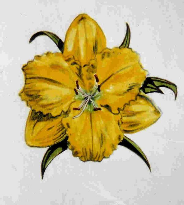 Summer Daylily Print by Dy Witt