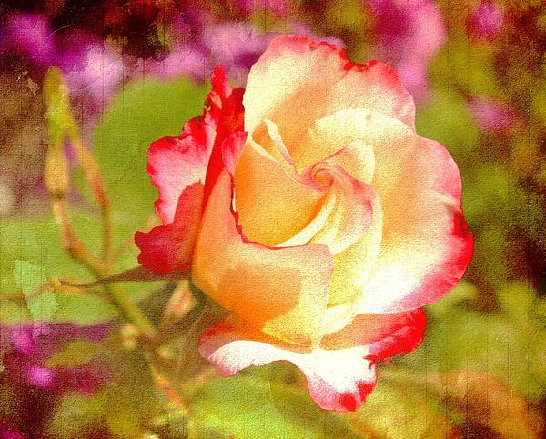 Summer Rose With Texture Print by Cathie Tyler