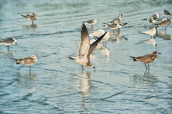 Cheryl Davis - Summer Seagulls