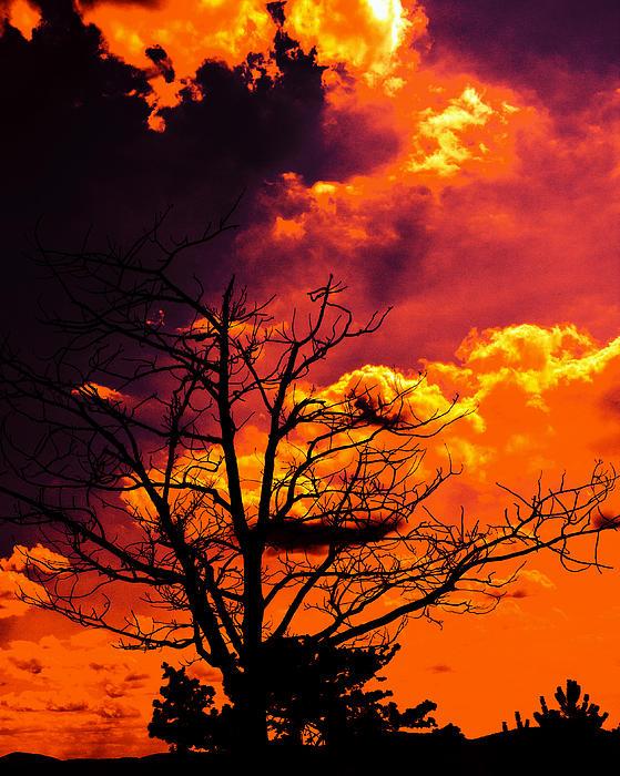 Tom Gari Gallery-Three-Photography - Summer Sun Set