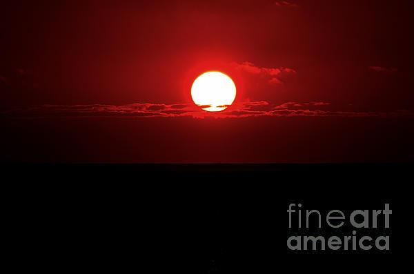 Sun Print by Pravine Chester