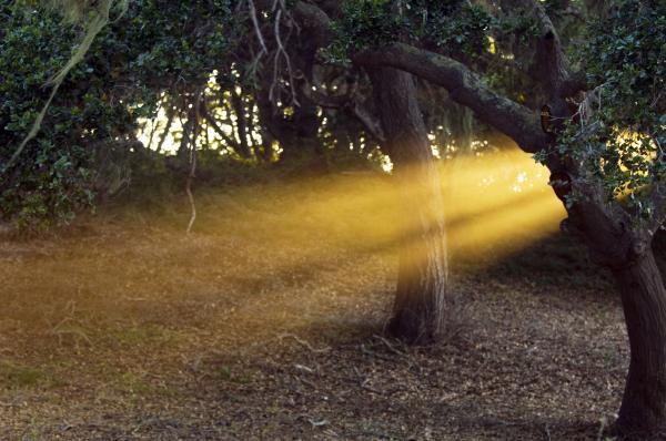 Jill Reger - Sun Rays 2