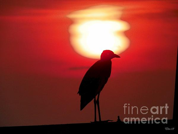 Laurence Oliver - Sun Set Bird