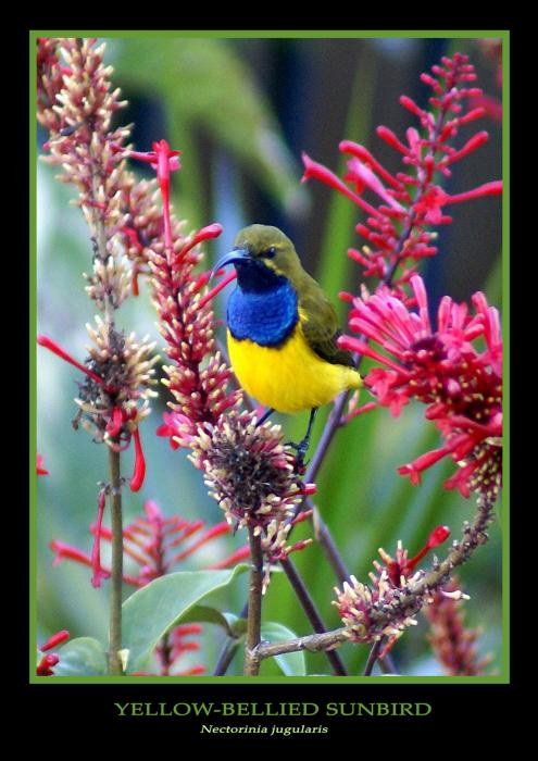 Sunbird Print by Holly Kempe