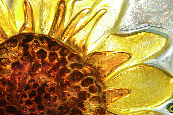 Sunburst Sunflower Print by Jerry McElroy