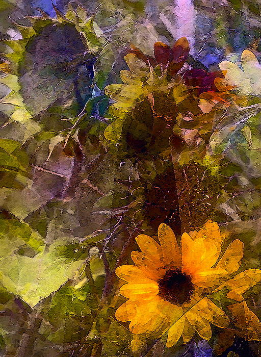 Pamela Cooper - Sunflower 12