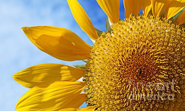 Andee Photography - Sunflower Cheer