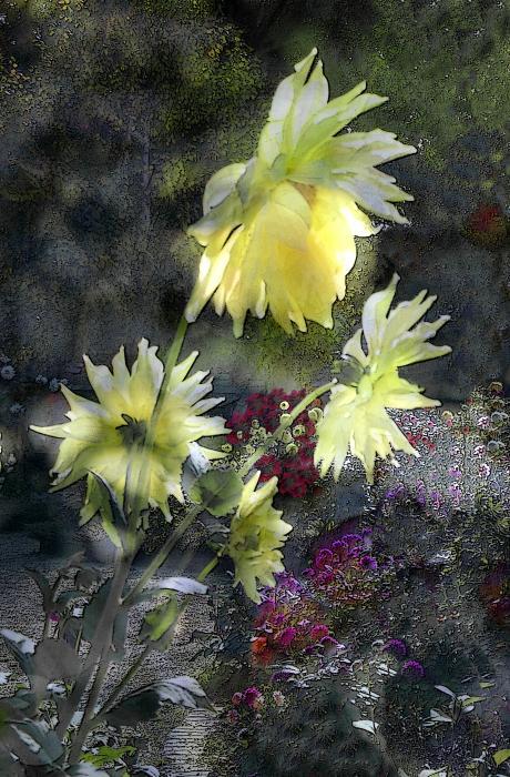 Sunflower Dream Print by Tom Romeo