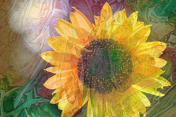 Judy Arbuckle - Sunflower in design