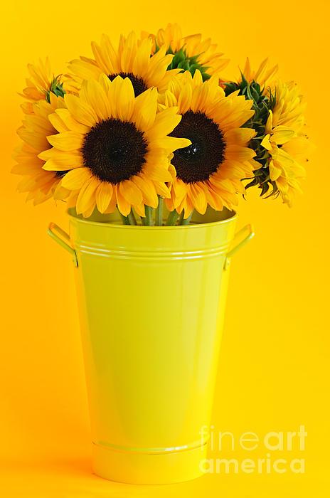 Sunflowers In Vase Print by Elena Elisseeva
