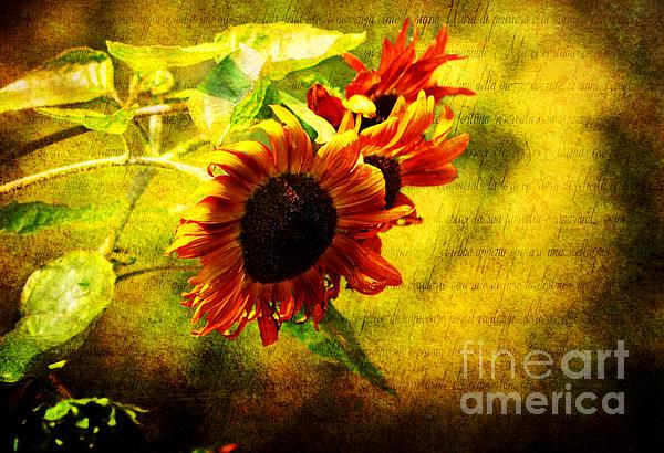 Elaine Manley - Sunflowers Lament