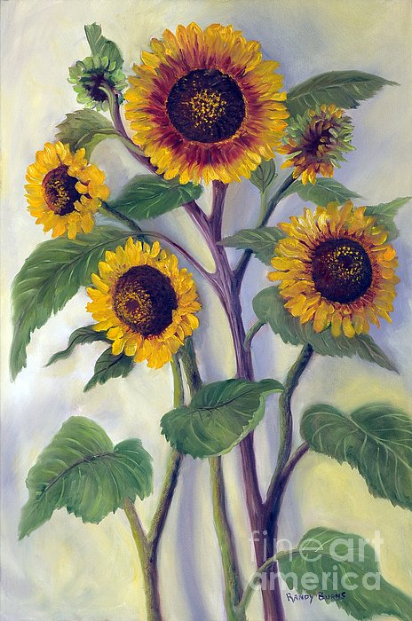Randy Burns - Sunflowers
