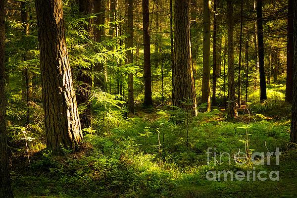 Lutz Baar - Sunny Forest