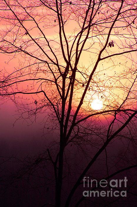 Sunrise Sunset Print by Kim Fearheiley