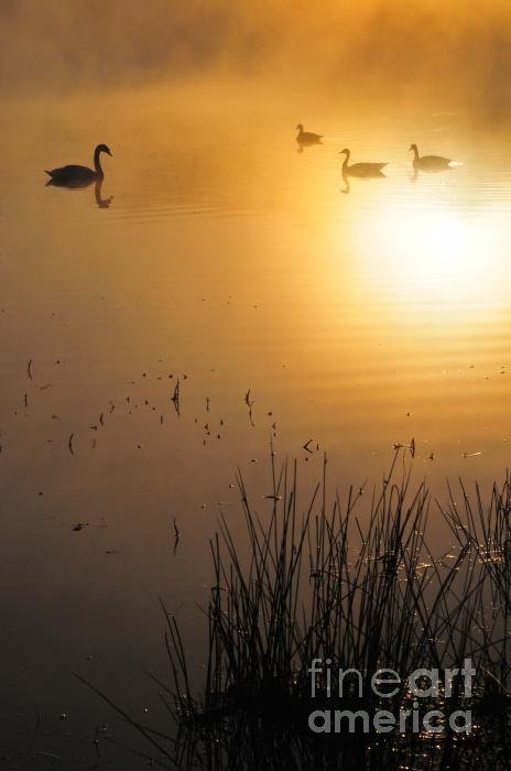 Catherine Reusch  Daley - Sunrise Swim