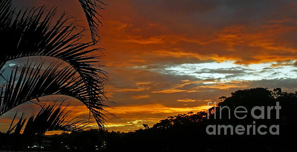 Sunset Behind The Palms Print by Kaye Menner