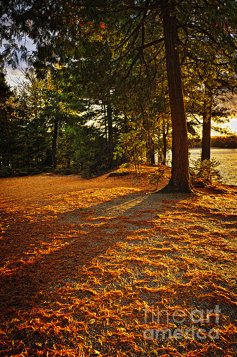 Sunset In Woods At Lake Shore Print by Elena Elisseeva