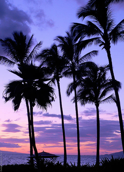 Sunset On The Palms Print by Debbie Karnes