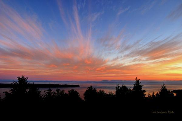 Sunset Over Cypress Print by Tom Buchanan