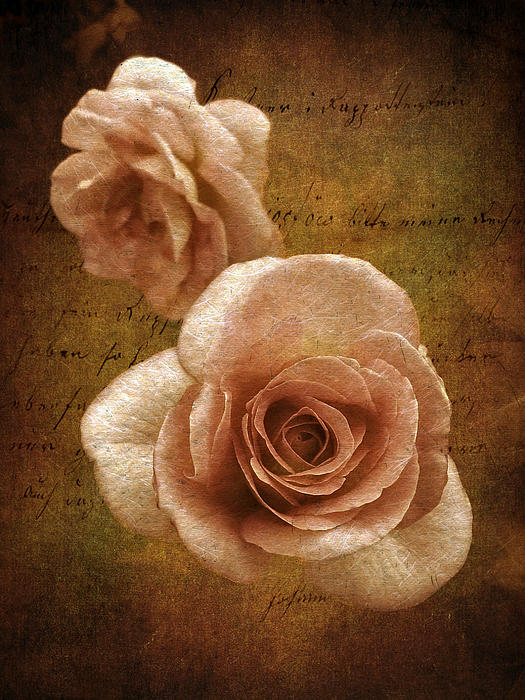 Jessica Jenney - Sunset Rose