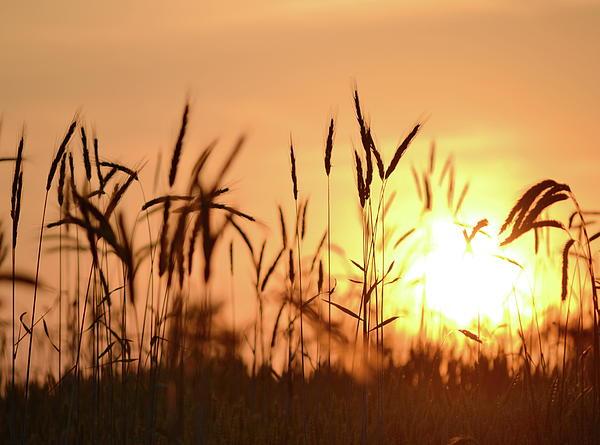 JD Grimes - Sunset Rye