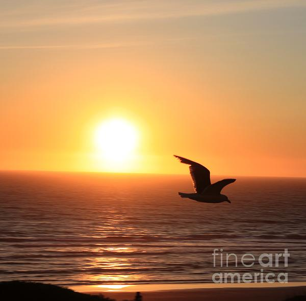 Sunset Seagull Print by Erica Hanel