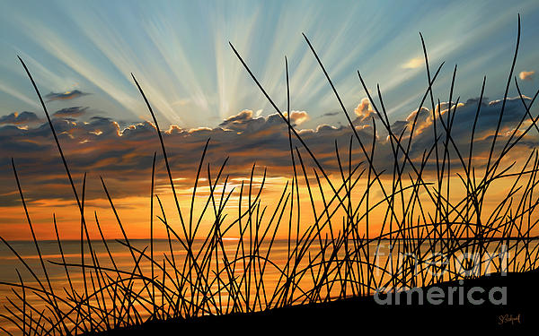 Sue  Brehant - Sunset Thru the Grass