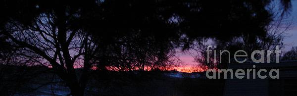 Windy Mountain - Sunset Thru Trees Eastern Washington
