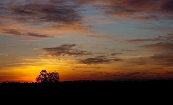 Sunset Tree Print by Randy Bayne