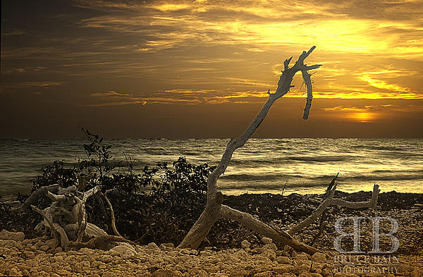 Sunset West II Print by Bruce Bain