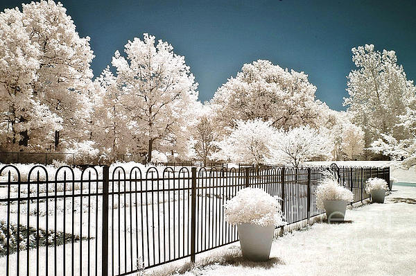 Kathy Fornal - Surreal Dreamy Color Infrared Nature and Fence