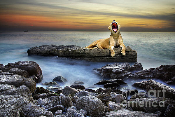 Surreal Lioness Print by Carlos Caetano
