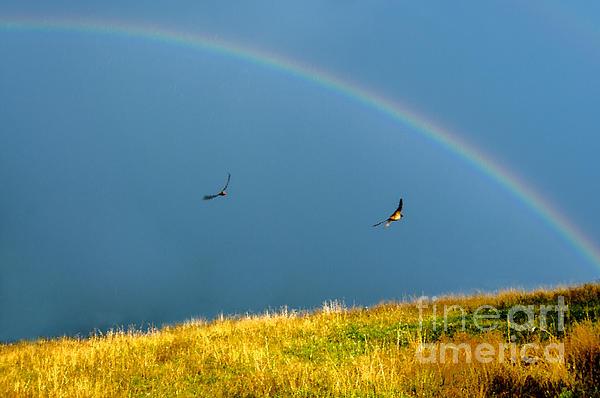 Swallows Under A Rainbow Print by Thomas R Fletcher