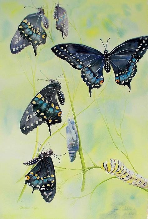 Celene Terry - Swallowtail Story