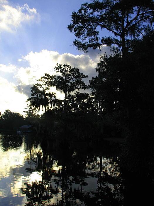 Swamp Dawn Print by Don L Williams