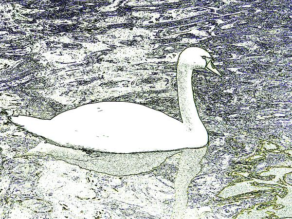 Swan Sketch Photograph  - Swan Sketch Fine Art Print