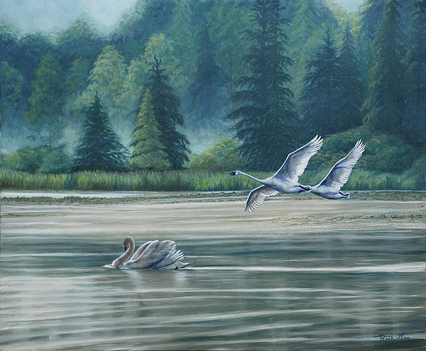 Swans On Carter Lake Print by Ruth Gee