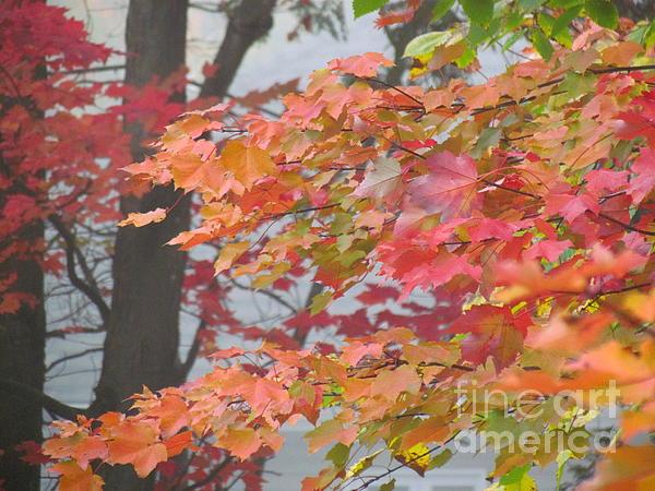 Symphony Of Autumn 20 Print by France Laliberte