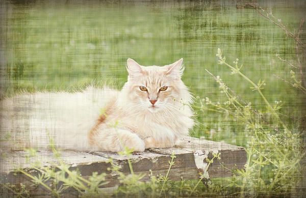 Tabitha  Print by Susan Bordelon