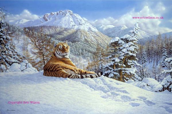 external image taiga-tiger-eric-wilson.jpg