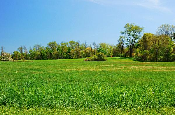 Tall Grass In The Field - Bayonet Farm Print by Angie Tirado