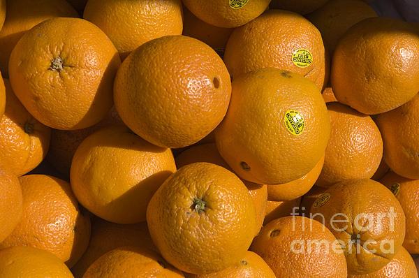 Tangerines Print by Tim Mulina